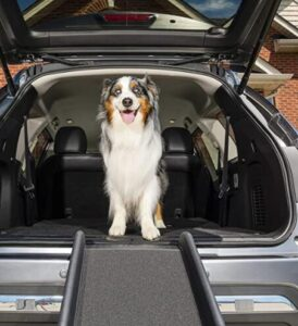 compact dog ramp for car