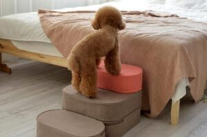 pet step stools for small dogs